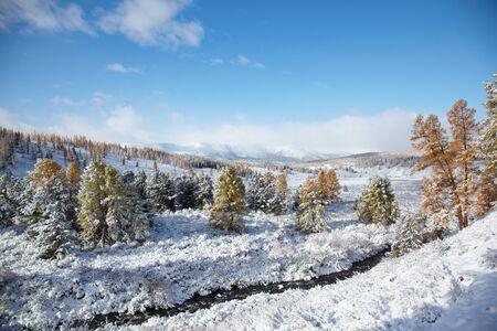 larix sibirica: View on Altai mountines and forest under snow Stock Photo