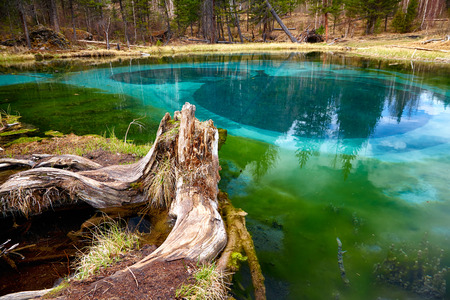 algal: So cold blue geyser lake in Altay mountains with old stump on foreground