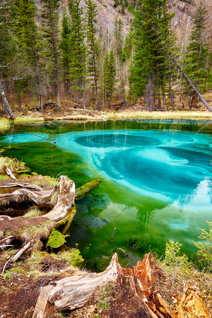 altay: So cold blue geyser lake in Altay mountains with old stump on foreground