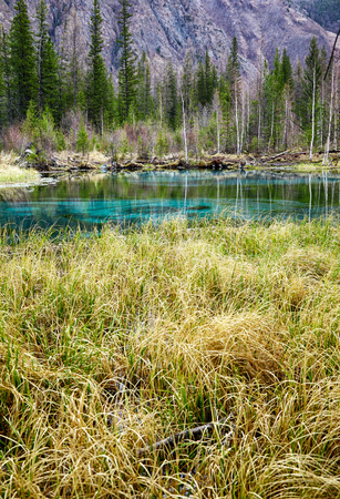 carex: So cold blue geyser lake in Altay mountains with sedge grass on foreground