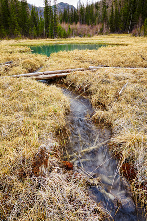 swamped: Logpath ower swamp in Altay tajga near Blue Lake at early Spring time