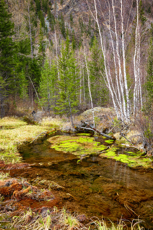 swampy: Swampy mossy stream in Altay Taiga