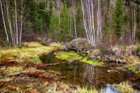altay: Swampy mossy stream in Altay Taiga