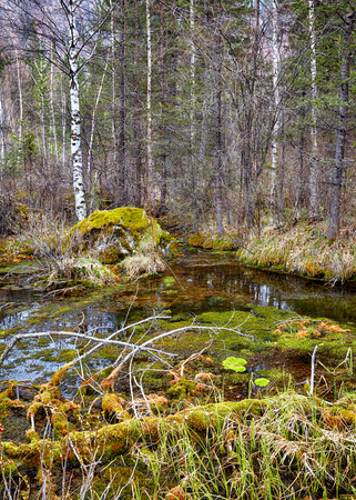 swamped: Swampy mossy stream in Altay Taiga