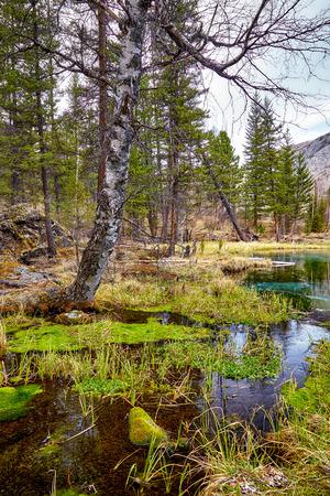 taiga: Moussues Swampy pr�s Bleu geyzer lac � Altay Taiga Banque d'images
