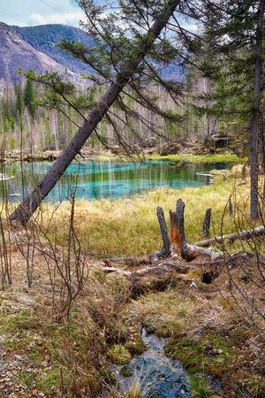 altay: Swampy mossy stream near Blue Geyzer lake in Altay Taiga