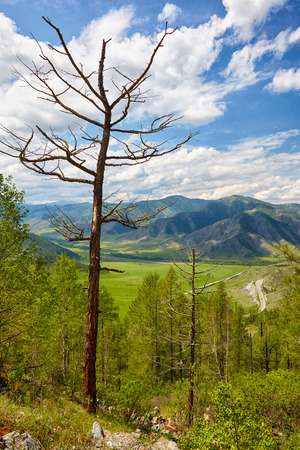 valley view: View on Altai valley from mountain pass ChikeTaman Siberia Russia