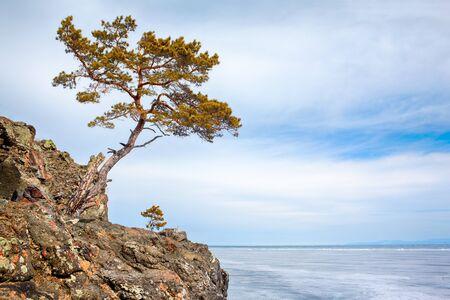 lonely tree: Lonely tree near Baikal lake in Siberia at winter