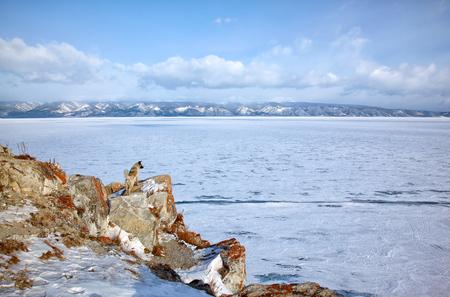 baical: Dog on  rocks in Olkhon island over Siberian lake Baikal in winter time