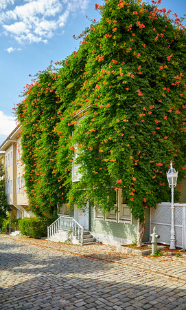 the 19th century: The typical Ottoman houses of the late 19th century wreathed with Campsis creeper trumpet creeper, trumpet vine on the Street of the Cold Fountain Sogukcesme  Sokagi, Istanbul, Turkey