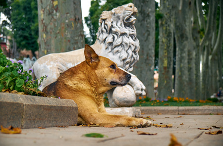 waif: A ginger dog reclines  on the pass near the statue of a lion in Gulhane park. Istanbul. Turkey Stock Photo