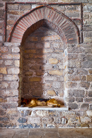 blinded: A stray dog sleeps in a blinded window of Hagia Irene Church, Istanbul, Turkey