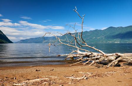 altay: Trunk of a fallen tree on the beech of Lake Teletskoye in Altay mountains Stock Photo