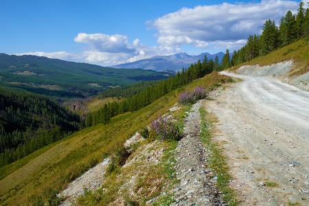 larix sibirica: Mountain road in Ulagan Highlands to Katu-Yaryk pass in Altai, Russia