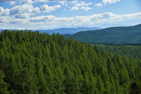 Altai mountains forest landscape in Ulagan Highlands. Siberia, Russia Stock Photo