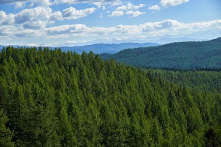 larix sibirica: Altai mountains forest landscape in Ulagan Highlands. Siberia, Russia Stock Photo