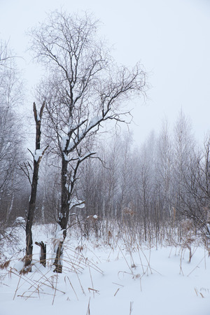 winter trees: Winter bare trees without leaves under snow and hoarfrost Stock Photo