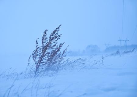 ice storm: Dry sagebrush grass under the blizzard ice storm in winter season
