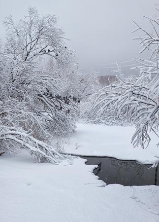 snowbound: Small winter stream under snowbound trees under snow in winter. Pigeons on brunches. Novosibirsk, Russia Stock Photo