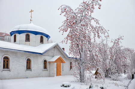 rowanberry: Parish of the Annunciation in Novosibirsk in winter season under rowanberry tree covered by snow