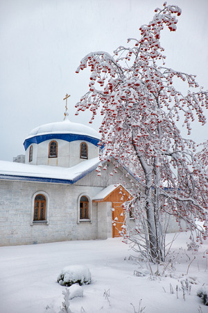 sorb: Parish of the Annunciation in Novosibirsk in winter season under rowanberry tree covered by snow