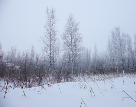bare trees: Winter bare trees without leaves under snow and hoarfrost Stock Photo
