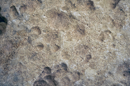 aragonite: The cavernous globigerina limestone of  megalithic temple of Hagar Qim injured by the severe weathering and surface flaking, Malta