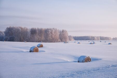 haymow: Siberian rural winter landscape with a stack of hay in the field covered by snow with birch forest on background