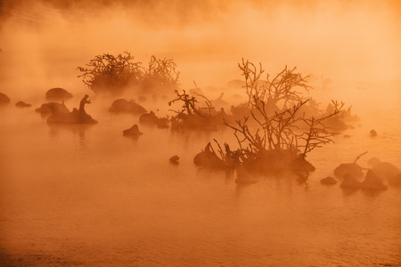 Snags in the river water in early winter morning.  Red - orange fog backlit by mystical sunlight Stock Photo