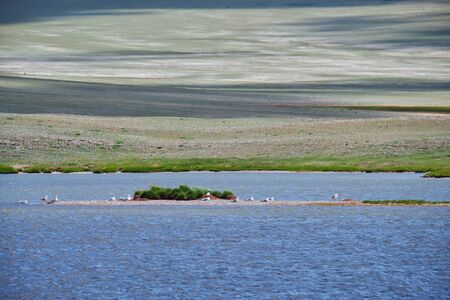 Small Mongolian lake. A flock of gulls sits near the water on the island. Mongolia, Bayan-Ulgay Aimak.