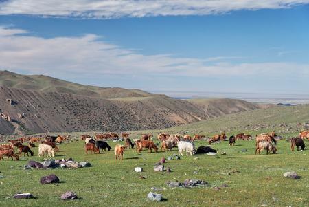 Tsagduult, western Mongolia