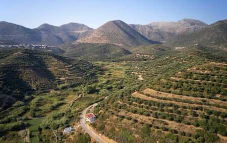 Aerial view from drone on cretan landscapes. Olive groves on the hils and mountain slopes.  Rethymno prefecture near Almirida village. Crete, Greece.