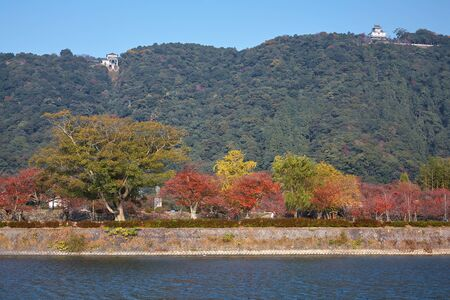 The colored leaves Japanese maples (momiji)  on the shore of Nishiki river in the fall. Iwakuni. Japan