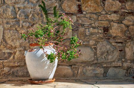 Flower pot with Geranium on the street of Lania village. Limassol. Cyprus
