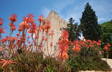 The blooming aloe in front of the keep tower of the former Crusader stronghold - Kolossi Castle. Kolossi. Limassol District. Cyprus