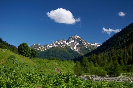 abkhazia: Abkhazia. Alpine meadow. The mountains