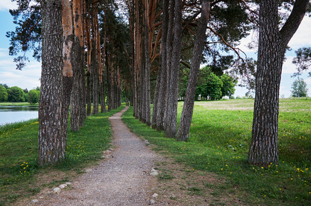 Forest path. Alley of tall trees. The river. Stock Photo