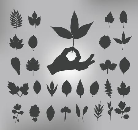leafs  Vector illustrationtion Stock Vector - 20960682