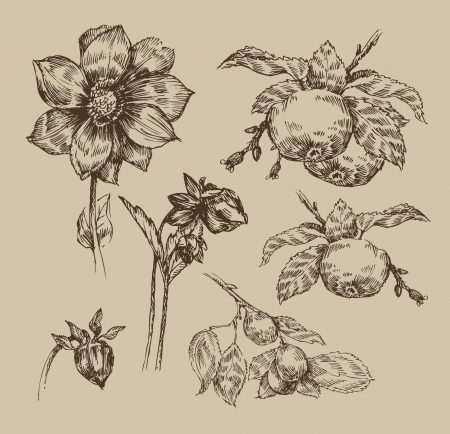 botanical drawing: Garden. Vintage pattern Illustration