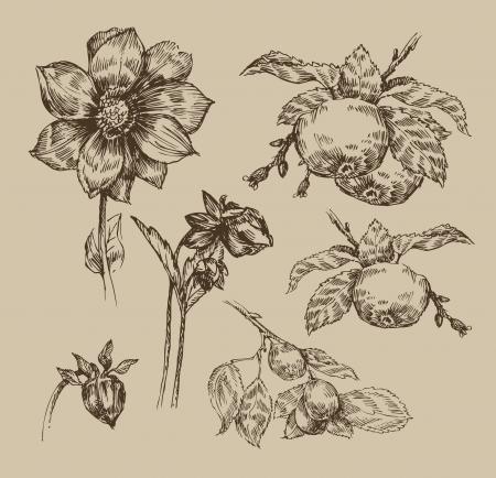 Garden. Vintage pattern Illustration