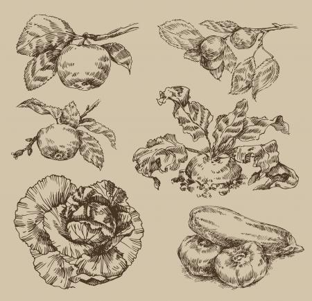 beets: Garden. Vintage pattern Illustration