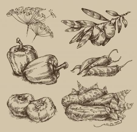 chili sauce: Garden. Vintage pattern Illustration
