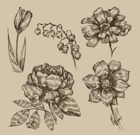빈티지 꽃 일러스트
