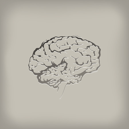 learned: Brain  Vector format Illustration