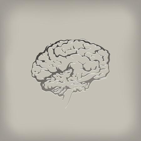 talamo: Formato vectorial cerebro