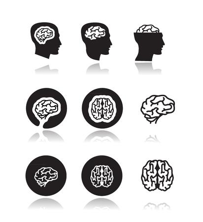 Brain  Vector format Illustration