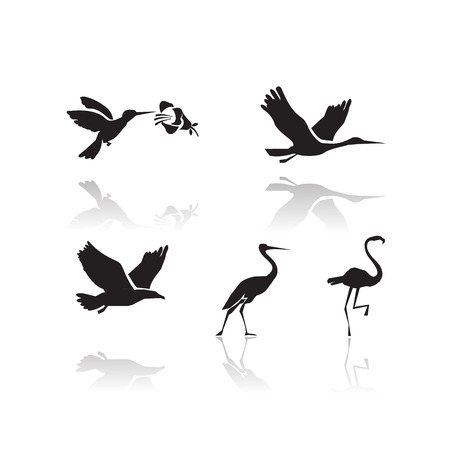spread eagle: Birds  Vector format