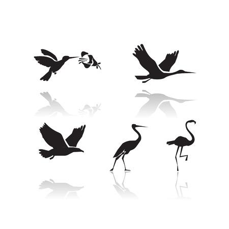 Formato Birds Vector Vettoriali