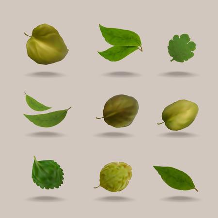 vegetate: Nature  Summer  Vector format