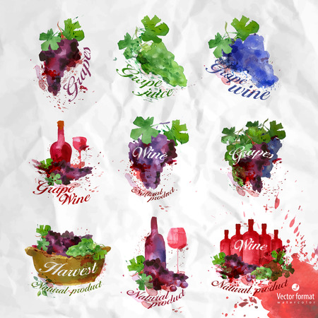 wine growing: Grapes.Vector format Illustration